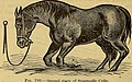 The art of taming and educating the horse (1884) (14761793674).jpg
