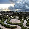 The maze (15529329531).jpg