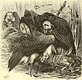 The royal natural history (1893) (14598220158).jpg