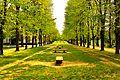 The tree corridor.JPG