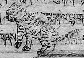 Tibetan Tiger (stag) day.jpg