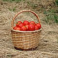 Tomatoes in basket 2020 G1.jpg