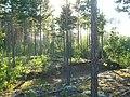 Tomsky District, Tomsk Oblast, Russia - panoramio (147).jpg