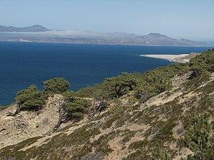 Coastal sage scrub - Torrey pine (Pinus torreyana) and southern coastal scrub, Santa Rosa Island.