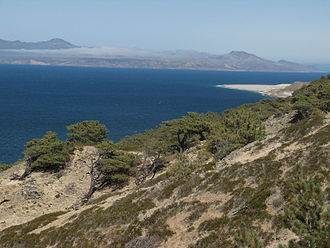 Santa Rosa Island (California) - Torrey pine grove on Santa Rosa island. View towards Santa Cruz Island.