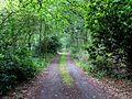 Track into Stapleford Wood - geograph.org.uk - 214077.jpg