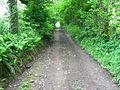 Track to Bwlchgwylt from Bancyffynnon - geograph.org.uk - 1316409.jpg