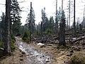 Trail near Rotenbeek 08.jpg