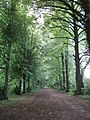 Tree-lined avenue to Shotover House - geograph.org.uk - 190861.jpg