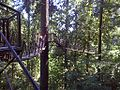 Tree top walk - panoramio.jpg