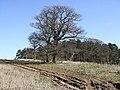 Trees and ruts - geograph.org.uk - 367547.jpg