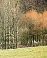 Trees bordering the canal near Flatheridge Bridge - geograph.org.uk - 196087.jpg