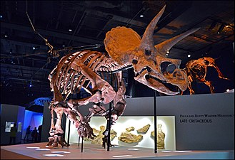 Triceratops Specimen at the Houston Museum of Natural Science v01.jpg