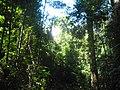 Tropska prašuma u Kambodži.jpg