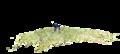 TuxaufRasen-Photogrammetriepunktwolke.png
