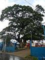 Tuy,Batangasjf2889 25.JPG