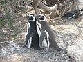 Two Penguins.jpg