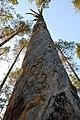TyrTR0-dry pine.JPG