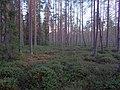 Tysjöarna-Jämtland-Sweden 04.jpg