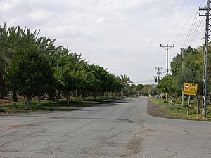 Tzofar - Image: Tzofar trees