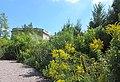 U.S. Botanic Garden in August (23500976220).jpg