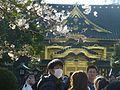 Uenotoshogu-sakura-uenopark-march26-2016.jpg