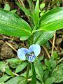 Unknown flower of bd 14.jpg
