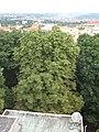 Výhled z Petřínské rozhledny 07.jpg