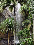 A picture of a waterfall obstructed by a couple of palm trees.