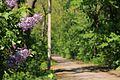Velyka Burimka Park 71-251-5001 DSC 6208.jpg