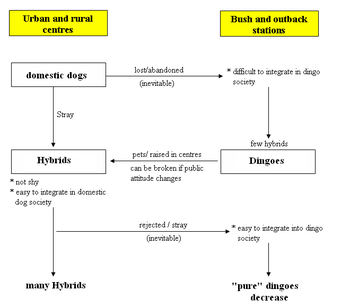 Interbreeding of dingoes with other domestic dogs - Wikipedia