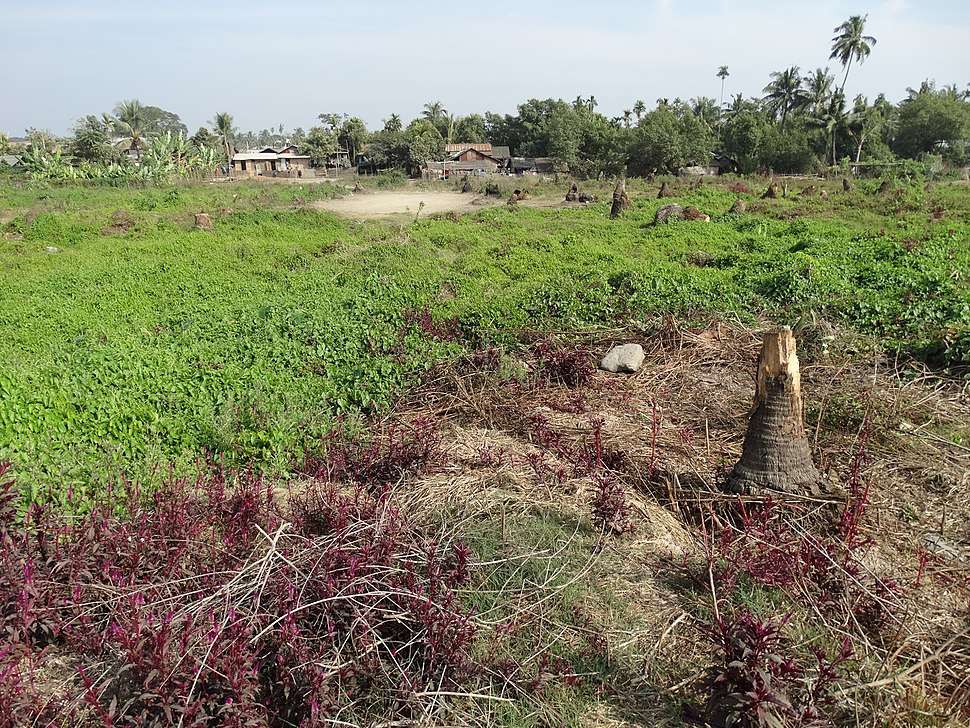View of Ruins of Narzi - Rohingya Village Burned and Bulldozed in 2012 - Sittwe - Rakhaing (Arakan) State - Myanmar (Burma) - 01 (12232067274)