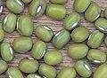 Vigna radiata, groene mungboon closeup.jpg