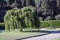 Villa La Petraia - Tree.jpg