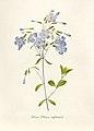 Vintage Flower illustration by Pierre-Joseph Redouté, digitally enhanced by rawpixel 58.jpg