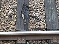 Viroflay-Rive-Droite rail 2016 I.jpg
