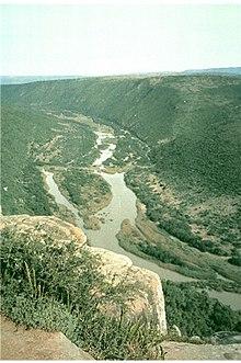 Lys van riviere in afrika
