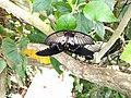 Vlinders aan de Vliet 15.jpg