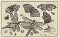 Vlinders en libellen.jpeg