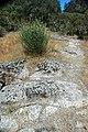 Volcanic tuff (Sonoma Volcanics, Upper Pliocene, 3.2-3.4 Ma; Calistoga Petrified Forest, Calistoga, California, USA) 7 (49092952557).jpg