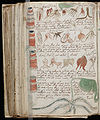 Voynich Manuscript (176).jpg