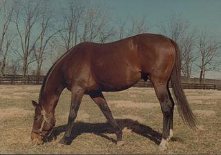 Wajima (horse) American-bred Thoroughbred racehorse