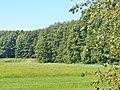 Wandlitzsee - Rundweg (Wandlitz Lake - Circular Walk) - geo.hlipp.de - 41837.jpg