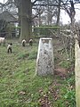 Westbeech Trig Post - geograph.org.uk - 1223347.jpg