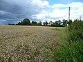 Wheat field at Grafton 1 - geograph.org.uk - 919974.jpg