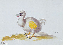 Painting of a white dodo with yellow wings