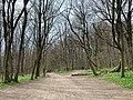 Wiener Wald 18 51 34 977000.jpeg