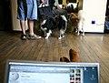 Wikimania impressions sunday1.jpg