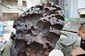 Willamette meteorite, AMNH 2.jpg