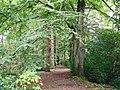 Wilmslow (Styal) - Styal Woods - geograph.org.uk - 255564.jpg